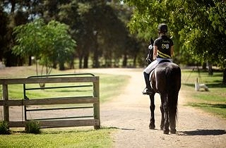 Riding as a Dialogue between Human and Horse